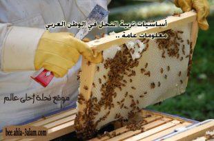 تربية النحل في الوطن العربي معلومات عامة