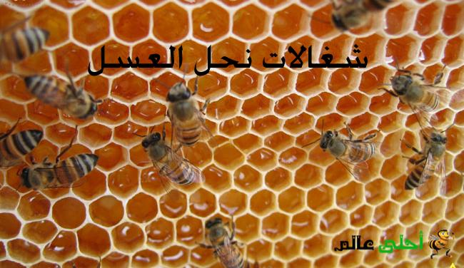 اعمال شغالات نحل العسل انضاج الرحيق