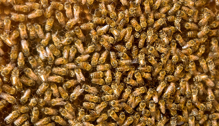 bee_honeycomb_03