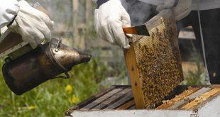 خطوات فحص خلية النحل الشاملة لتربية النحل من موقع نحلة