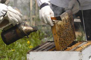 النحل,خطوات فحص خلية النحل.العتلة,المدخن,فحص طوائف النحل,طرق تربية النحل,فحص النحل,