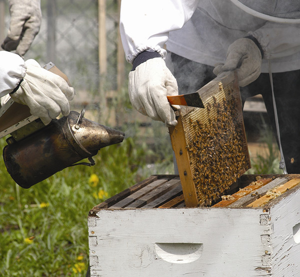 خطوات فحص خلية النحل الشاملة لتربية النحل من موقع نحلة,تربية النحل,أمراض النحل,النحل,خلايا النحل