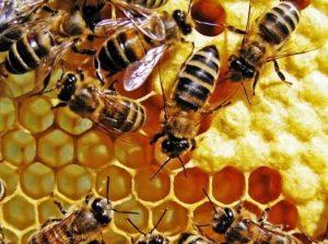 طريقة جمع و افراغ النحل للماء