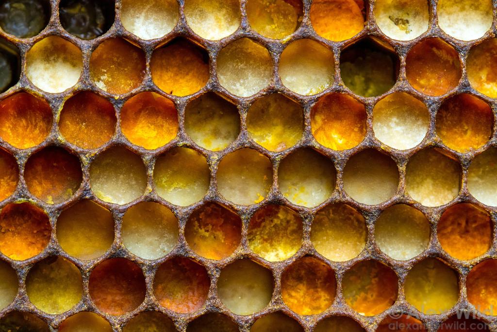 الفيتامينات مليئة في خلية النحل  لتواجدها بكثرة في  غبار الطلع