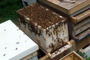 أهداف فحص طوائف النحل أو الكشف عليها متباينة و متعددة