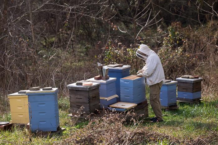 فحص طوائف النحل من الاعمال النحلية في الربيع المبكر