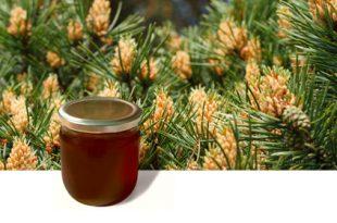 العسل و الصنوبر قيمة غذائية و علاجية لا مثيل لها