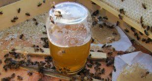 تغذية النحل بالمحاليل السكرية أهم الإجراءات والاحتياطات المتبعة