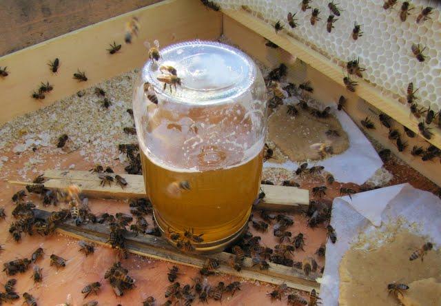 تغذية النحل بالمحاليل السكرية أهم الإجراءات والاحتياطات المتبعة832
