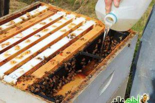 تغذية طوائف نحل العسل طرقها أغراضها أهميتها
