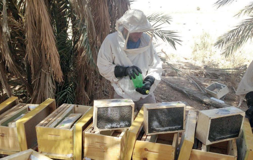 تقسيم طائفة النحل بعض طرقها و أهم الخطوات المتبعة في تنفيذها