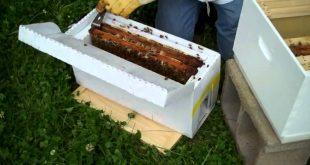 تطريد النحل الصناعي طرقه شروطه وأهم الخطوات المتبعة لنجاحه