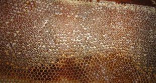 العسل,عسل,الدهون في العسل,عسل النحل,النحل,العسل للأطفال, مكونات العسل,الغرويات في العسل,الزيوت الطيارة في العسل,المواد المولونة في العسل,خلية النحل,الأحماض بالعسل,الفيتامينات بالعسل,