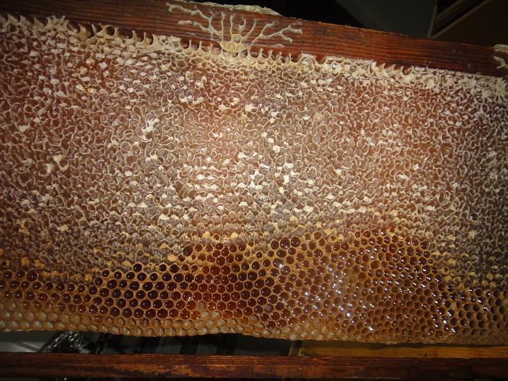 الدهون في العسل أنواعها و أهميتها و مصدرها و المثبطات و الزيوت و الملونات و الغرويات