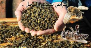 أعراض تسمم النحل , اعراض تسمم النحل, تسمم النحل, موت النحل, اسباب موت النحل, موت النحل بكثرة, اسباب موت النحل بكثرة, تسمم النحل بالمبيدات, نحلة, النحل, موقع نحلة, أحلى عالم , نحلة أحلى عالم