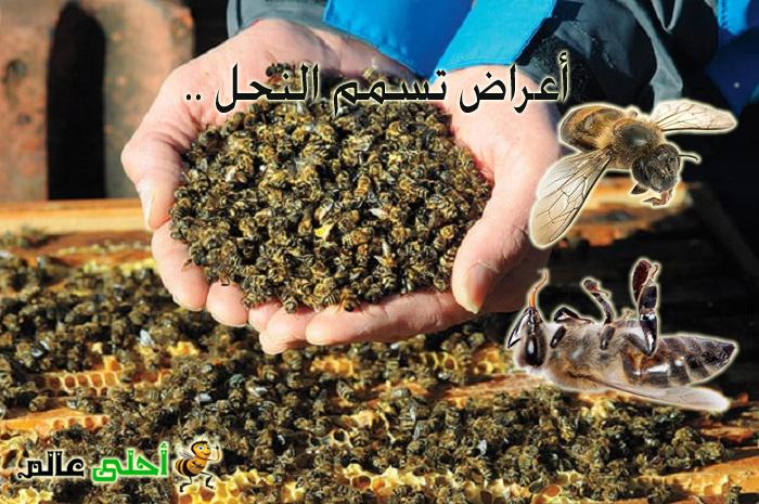 أعراض تسمم النحل بالمبيدات داخل خلية النحل و خارجها موقع نحلة