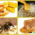 اهمية شمع النحل, صناعة الشمع, ماهو شمع العسل, تركيب شمع النحل, تكوين شمع النحل, فوائد شمع النحل, فوائد الشمع, فوائد شمع العسل ,طريقة إفراز الشمع, نحلة احلى عالم, موقع نحلة, الشمع, شمع العسل, شمع النحل,