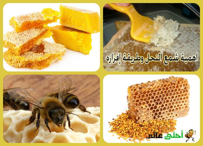 اهمية شمع النحل وطريقة إفرازه