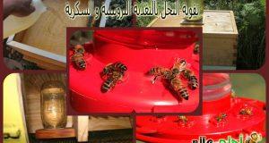 تقوية النحل, تربية النحل, النحل, نحل, تغذية النحل, طرق تقوية النحل, كيف أقوي الخلية, تقوية الخلية, تغذية خلية النحل, تغذية الخلية, تقوية النحل بالتغذية, التغذية البروتينية للنحل, التغذية السكرية ,موقع نحلة ,احلى عالم