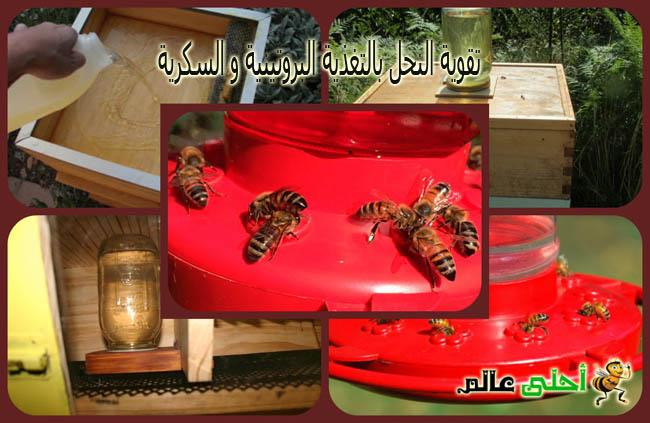 تقوية النحل بالتغذية البروتينية و السكريةمن موقع نحلة احلى عالم