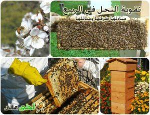 النحل في الربيع, تقوية النحل في الربيع ,مبادئ تقوية النحل, كيف أقوي الخلية, تقوية خلايا النحل, النحل, تربية النحل, طرق تربية النحل, طرق تقوية النحل, أحلى عالم, موقع نحلة, وسائل تربية النحل,