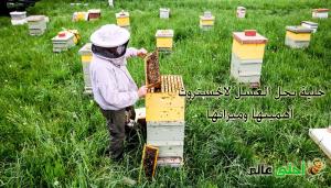 خلية نحل العسل لانجستروث , خلية النحل, النحل, العسل, موقع نحلة , نحلة احلى عالم , خلية لانغستروث ,خلية لانجستروث