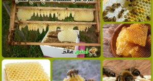 شمع العسل, شمع النحل, الشمع, متطلبات انتاج الشمع, مكونات شمع العسل, متطلبات انتاج الشمع, كيف يصنع شمع النحل, كيف يصنع شمع العسل, متطلبات صنع الشمع, متطلبات صنع شمع النحل
