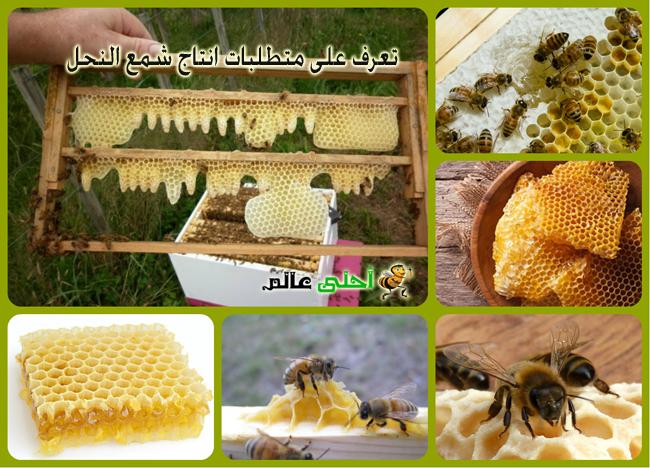 شمع العسل تعرف على متطلبات انتاج شمع النحل