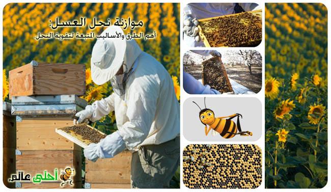 موازنة نحل العسل أهم الطرق والأساليب المتبعة لتقوية النحل.