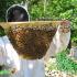 وقاية النحل من التسمم, وقاية النحل من الامرا, علاج النحل, النحل, العناية بالنحل, تربية النحل, منع تسمم النحل, تسمم النحل, نحلة احلى عالم, موقع نحلة