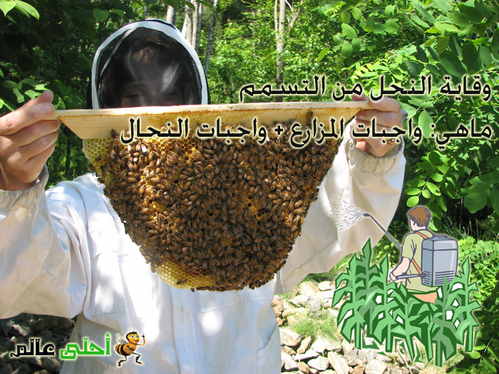وقاية النحل من التسمم والمبيدات وماهي واجبات المزارع والنحال موقع نحلة أحلى عالم