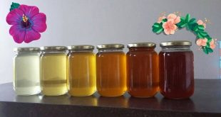 ألوان العسل,لون العسل,العسل,منتجات النحل,عسل النحل,فوائد العسل,أنواع العسل, الرحيق,العسل الجبلي,عسل السدر,عسل الكستناء,عسل القطن