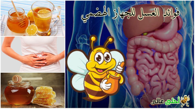 فوائد العسل للجهاز الهضمي من موقع نحلة احلى عالم نحلة أحلى عالم