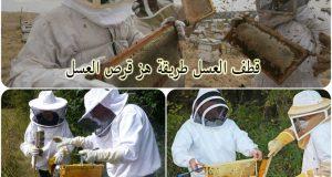 قطف العسل , جني العسل, جمع العسل, طريقة قطف العسل, تربية النحل, العسل, احلى عالم , موقع نحلة, جني العسل هز قرص, قطف العسل من الاقراص, طريقة هز قرص العسل