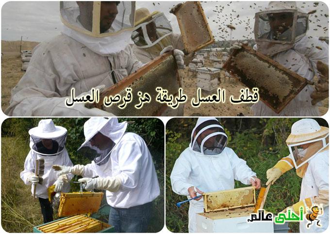 قطف العسل طريقة هز قرص العسل
