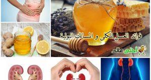 فوائد العسل, عسل, العسل, نحلة, نحلة أحلى عالم, موقع نحلة , احلى عالم, العسل للكلى, فوائد العسل للجنس, العسل للجنس, العسل للسالك البولية, العسل للمسالك التناسلية, العسل للكليتين, العسل للكلى, العسل لحصى الكلى, علاج حصى الكلى, علاج البحصة, العسل للبحصة, البحصة