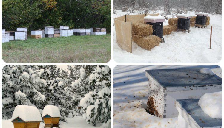 تشتية خلايا النحل,النحل,المناحل,تشتية النحل,النحل في الشتاء,ادارة المناحل,تربية النحل
